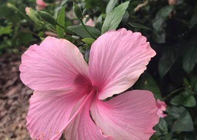Flower St John US Virgin Islands